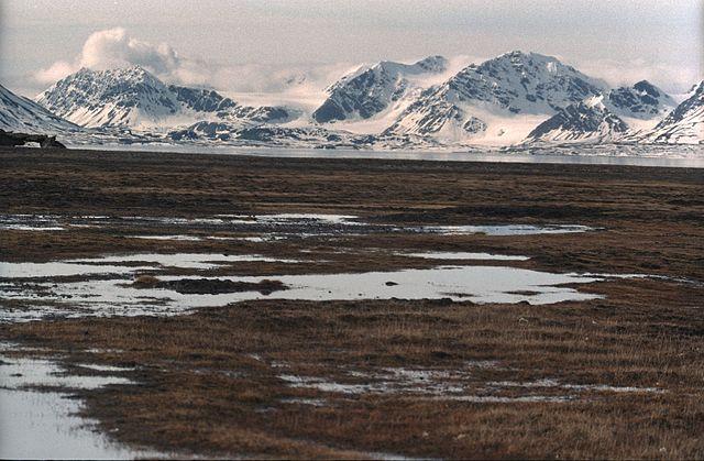 Svalbard Tundra.jpg